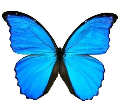 square blue butterfly on white